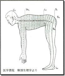 dermatomenorm