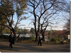上野 不忍池 綺麗な方