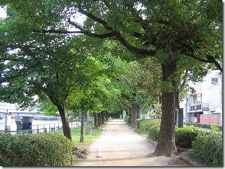 散歩コース:京橋川東堤防遊歩道