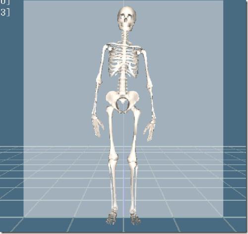 骨格CG画像